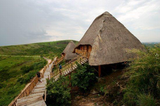 Gorilla_trekking_Uganda