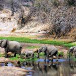 Ruaha_National_Park