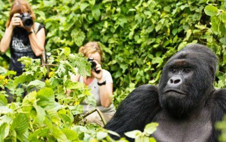 gorilla_trekking