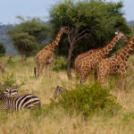 meru_national_park