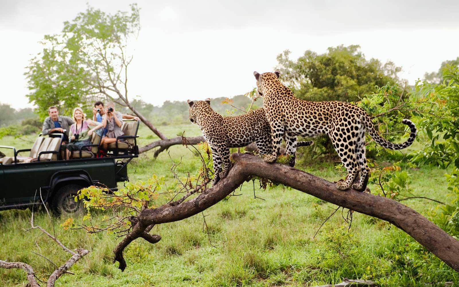 safariicon_bg