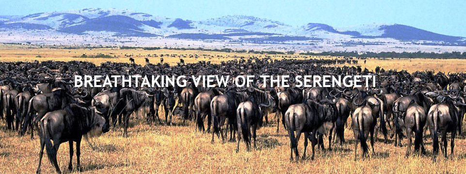 serengeti_national_park1-1