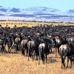 serengeti_national_park1