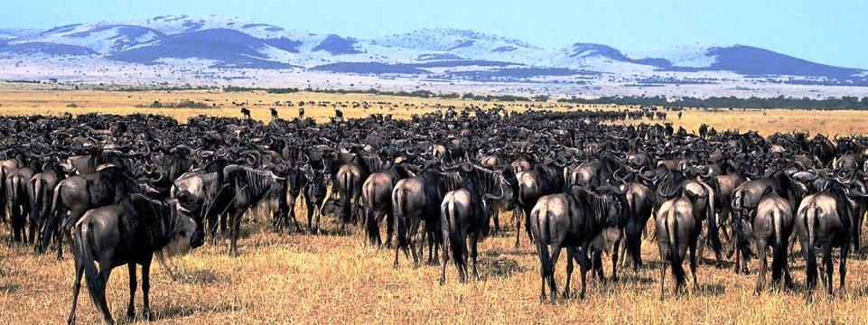 serengeti_national_park1